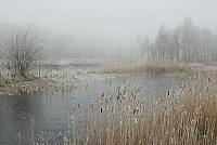Ven met riet in winter PVH2-8016