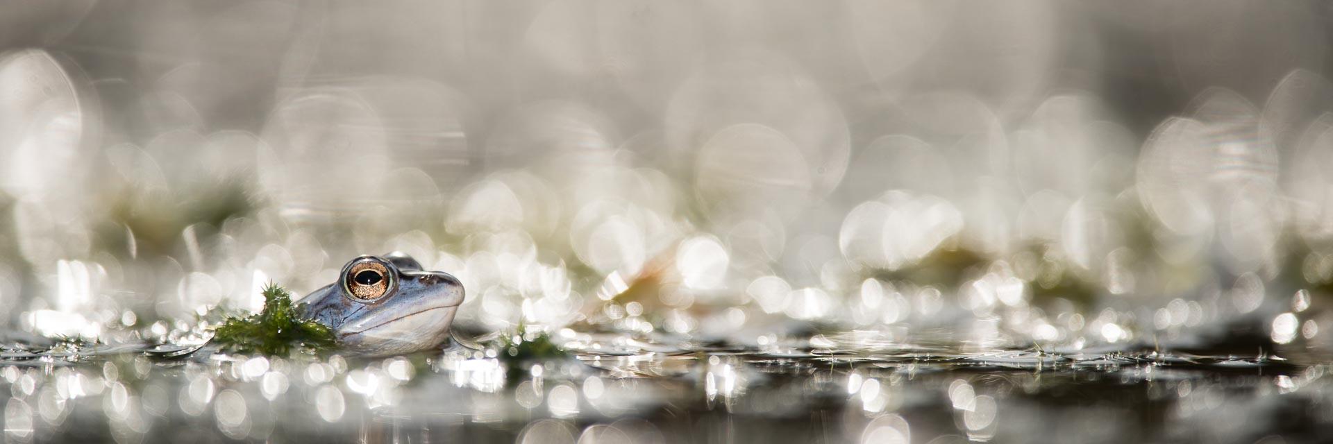 Paul van Hoof Nature Photography